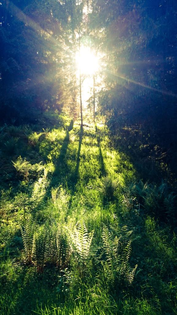 Wental – Ein bisschen ohne Maskerade